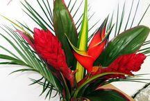 Bouquets / Bouquets Flowers