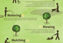 Spring Lawn Care/Landscaping