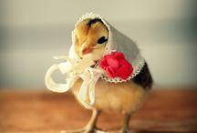 chickens:-)
