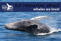 10 Resources About Whales We Love! / For more information on the top 10 whale resources we love, click here http://bit.ly/1hBvj0O