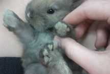 adorable cute animals