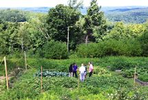 Farm to Table / Our Chef's garden - grown from seed - picked with pride - to your plate.