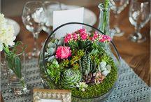 Succulent/cactus plant