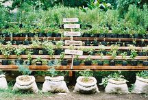 Green Thumb Gardening... / by Jeanne Weenink