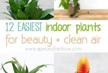 Easy Maintenance House Plants / Gorgeous plants that don't need much light
