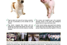 Animal Welfare / Pictures about animal welfare issues