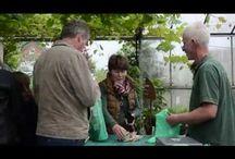 Kräutergarten / Alles rund um Kräuter findest du hier: Gärtnern ist mehr als ein Trend. Gärtnern ist ein Lebensgefühl! Wir unterstützen dich dabei mit kräftigen, robusten Pflanzen, die aus nachhaltiger Aufzucht aus unserer Kräuterei in Nordhorn stammen und ohne Einsatz von Pestiziden aufgezogen wurden. Neben klassischen Sorten wie Basilikum, Schnittlauch, Petersilie und Co., warten auf dich jede Menge ausgefallene Sorten mit vielen Überraschungen in Duft und Geschmack. Und jetzt lass dich inspirieren!
