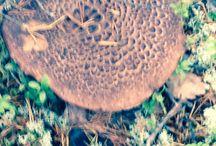 Nature's decorative elements:)