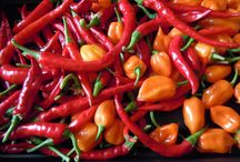 All things Chilli / Everything from recipes to Growing of Chillis