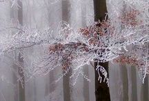 Winter / by Ana Alcaraz