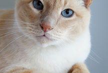 Idée de photo de chat