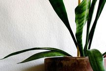 Plants for good air quality