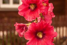 Kwiaty (moje)