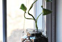 plants hanger
