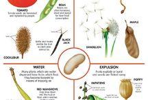 Teaching botany