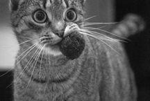 Gatos e Natureza