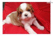 Adorable puppy / by Mary Tegtmeier