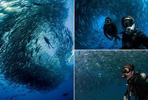 Scuba diving and snorkelling around the world