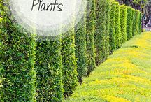Landscape-Living Fence / Plants, Shrubs & Idea's / by Linda Finni