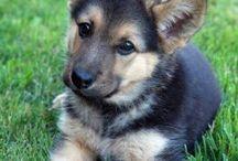 ANIMAL LOVERR!