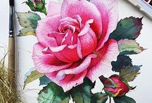 * botanical illustrations *