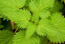 tips de yerbas medicinales