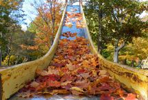 Fall Foliage / Fall foliage photos you can enjoy all season long / by The Davey Tree Expert Company