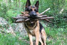 Nemecký ovčiak :~>