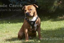 Handmade Leather Harnesses  / Staffordshire Bull Terrier Harnesses - we make  our Stafford Harnesses