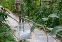 Hedelmäpuut