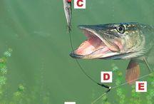 angling&fish