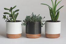 Plants & Centrepieces