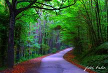 lasy forests