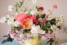 The Earth Laughs in Flowers / by Elizabeth Koes