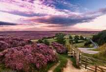 Yorkshire / by Anne Nelson