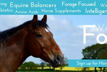 About Forageplus / The Forageplus mission is to promote whole horse health using the ideas of the leading horse educators around the world. To create value and make a difference to horses and their horse owners through good science and information that works.