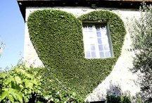 wedding / house with vines cut into a hart shape / by Nell Mednick
