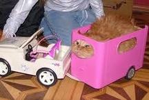 Kitties! / by Mallory Sterkel