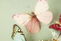 Butterflies papillons