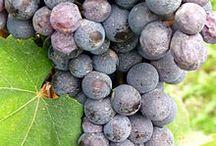 Wine / Photos related to wine