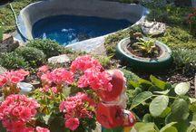 Oczko wodne w ogrodzie.
