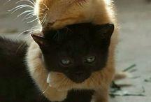 animale cute