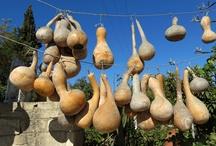 Derekoy / Images of Derekoy from the Bodrum Peninsula Travel Guide: Turkey's Aegean Gem