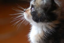 Cute: Animals / by Amy Kaptsenel