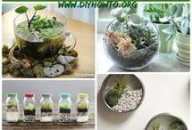 Succulent plants +