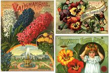 Collection: Seed and Nursery Catalogs Collection / Andersen Horticultural Library at the University of Minnesota hosts one of the largest seed and nursery catalog collections in the country. Numbering nearly 60,000 and dating from 1828 to the present, it includes catalogs from every state and 26 countries. Minnesota and other Upper Midwest companies are strongly represented. / by University of Minnesota Libraries