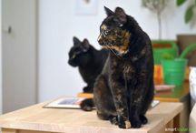 katzenfutter selbst kochen