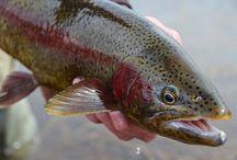 Fishing - Trout / by Winn Grips