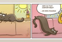 catsu the cat!!!!!!!!!