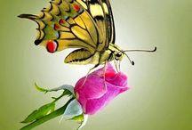 FAUNA - ptáci, motýlci......